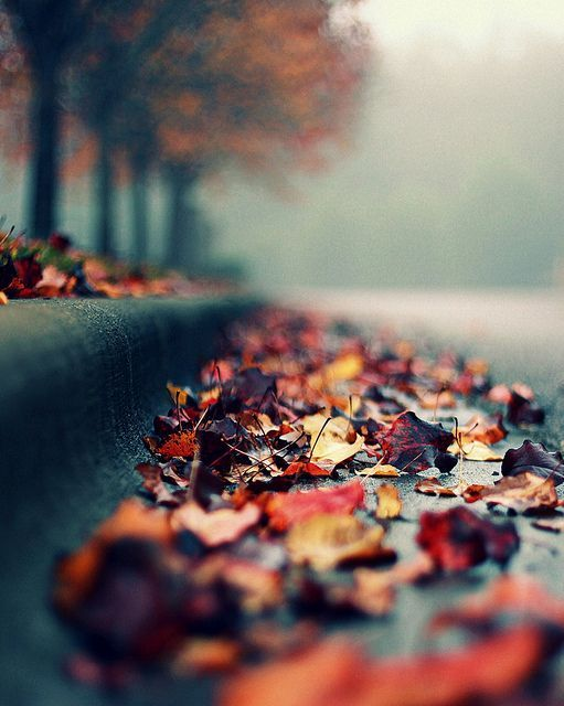 Autumn is time for contemplation. What wisdom does the autumn foliage holds? Rea...