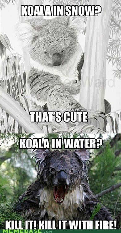This Goes Out Koala My Haters Out There