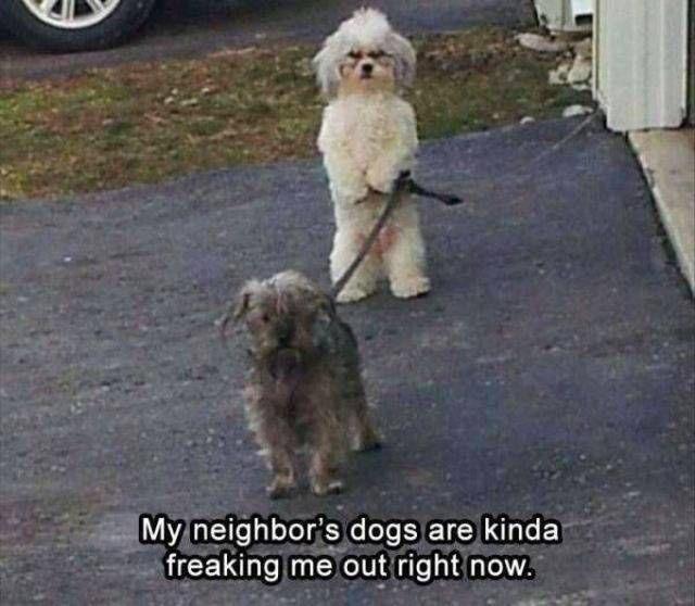 Over 30 funny animal memes to laugh until you drop - animal blog