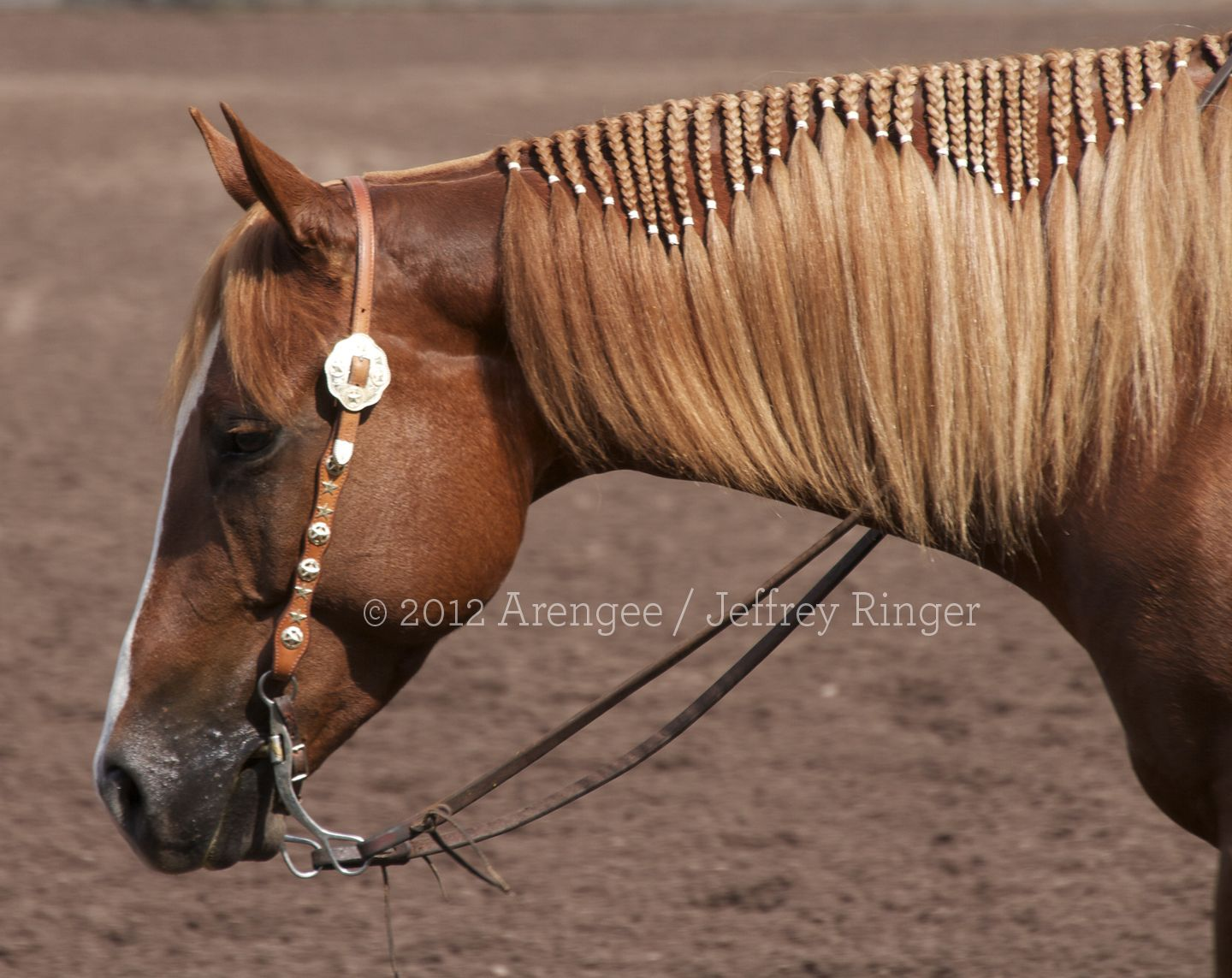 braided mane - This horse looks like my mare Cheyenne.  Maybe one of these days ...