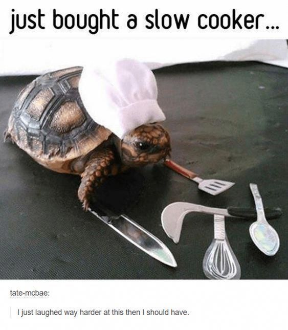 30 Random Funny Photos and Memes That Will Give You the Best Laugh of the Day - ...