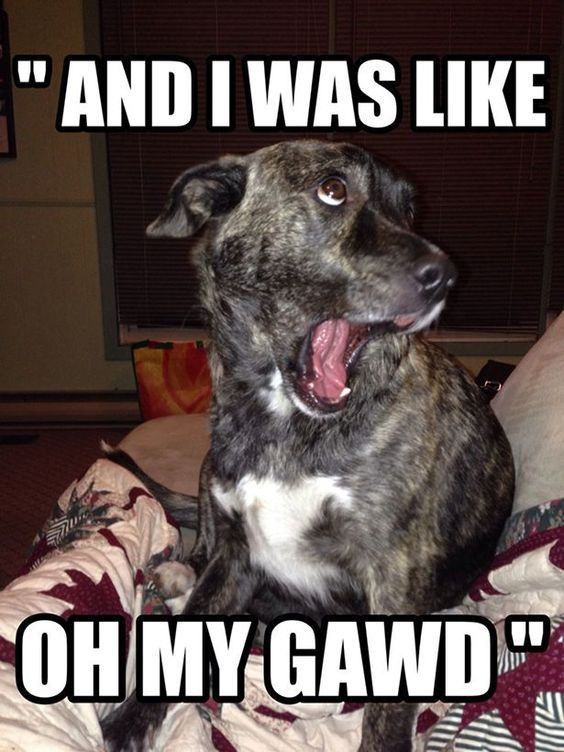 Pictures of the Day - Top 50 Funny Internet Dog Memes | FallinPets